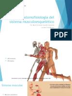 Anatomofisiologìa Del Sistema Musculoesquelètico