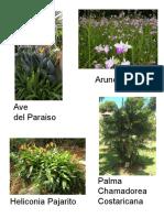 fichas plantas tropicales paisajismo