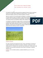 Imforme de Produccion y Manejo de Forraje