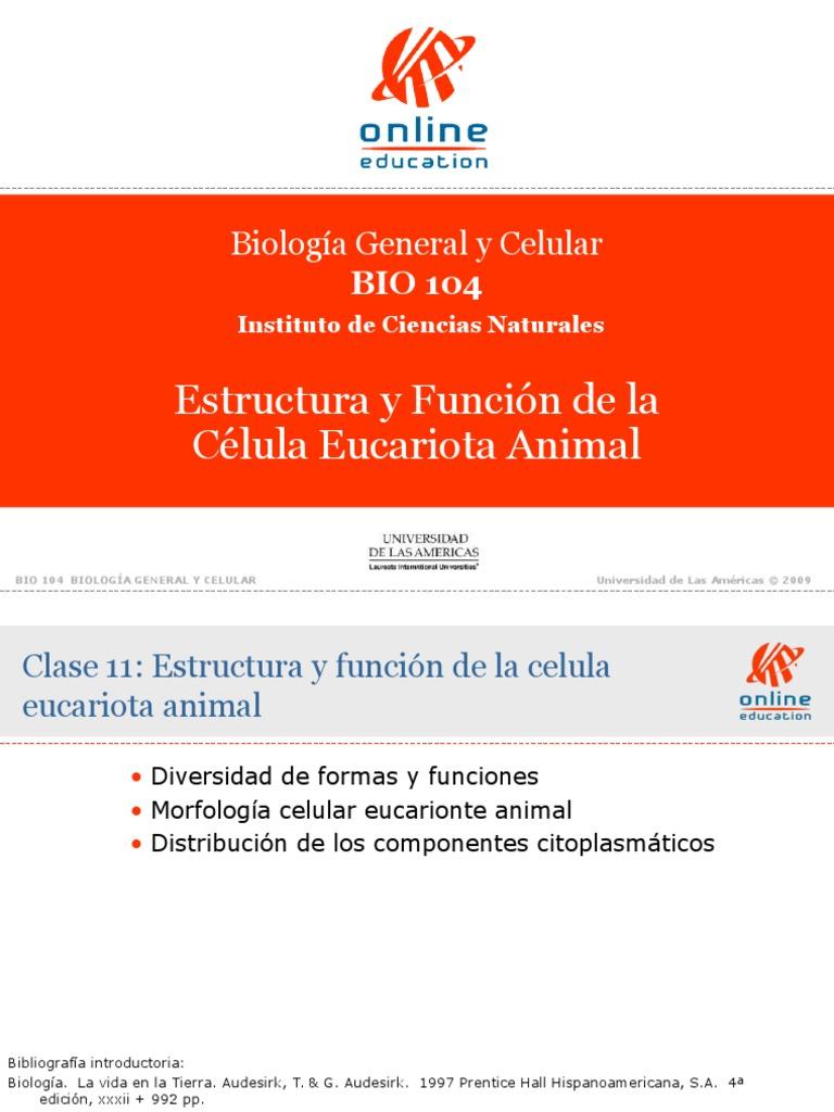 Clase 11 Estructura Y Funcion De La Celula Eucariota Animal
