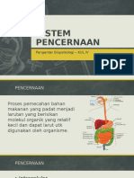 Sistem Pencernaan Pengantar Biopsikologi