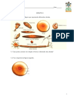 Test Cn 5ano Celulas Ahm