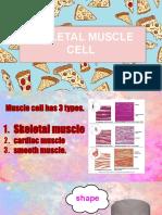 skeletal muscle presentation