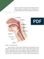 Anatomi Jalan Nafas Ppy