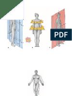 Sobotta - Atlas de Anatomía humana (Láminas).pdf
