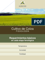 colza_fisiologia