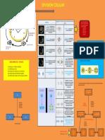 Infografia - Division Celular - Cuicapuza Varillas Angela Karina
