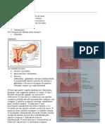 Patologia reprodutor