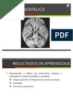 Clase 34 Tronco Encefalico y Cerebelo