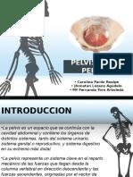 Diapositivas PPP