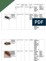 Serangga Gudang