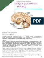 Cura e Ascensão - Tudo Sobre a Glândula Pineal