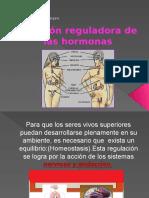 Función Reguladora de Las Hormonas