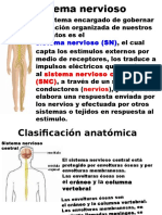 Ppt Sistema Nervioso y Endocrino