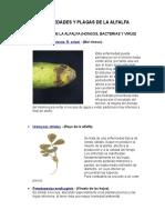 Enfermedades y Plagas de La Alfalfa(PASTOS Y FORRAJES)