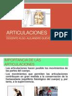 Clase Sistema Articular