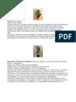 Plantas Purificadoras Del Aire