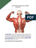 Cantidad de Musculos en El Cuerpo Humano