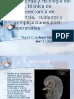 Anatomía-y-Fisiología-del-bazo.pptx