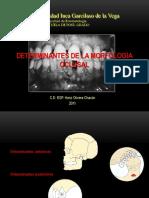 7. Determinantes de La Morfología Oclusal