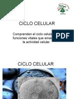 1 Reproduccion Celular