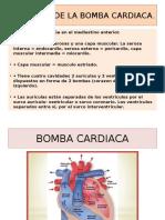 Anatomia de La Bomba Cardiaca