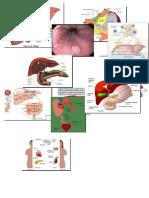 Imágenes de algunos órganos del cuerpo humano