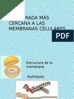 3 Membrana Celular