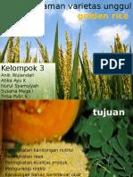 Tanaman Varietas Unggul Golden Rice