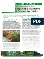 Growing Shiitake Mushrooms in an Agroforestry Practice