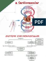 Sistema Cardiovascular Diapositivas