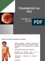 d - Fisiologia Do Sistema Reprodutor