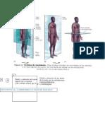 Orientaciones y Movimientos Anatómicos