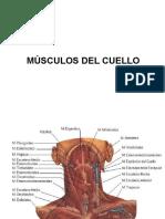 3. Musculos Del Cuello