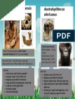evolusi tengkorak