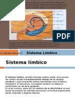 Sistema Lmbico
