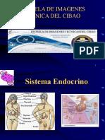 endocrino-ecr-1211492795023268-8