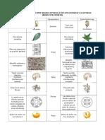Cuadro Comparativo Entre Magnoliopsidas y Liliopsidas