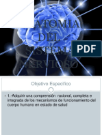 Anatomia De lsistema nervioso