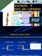 Clase 10. Digestion Lipidos