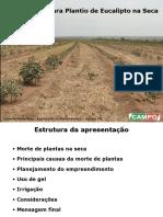 Tecnologias Para Plantio de Eucalipto Na Seca