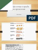 1. Gradba Na Hromozomi i Citogenetika