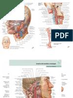 Esquearterias mas de Arterias
