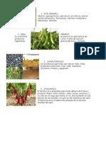 cosechas de los departamentos de guatemala.docx
