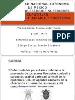 Enfermedades Comune Conejo Zuñiga Brenda Grupo1604