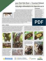 Botryosphaeriaceae  palto