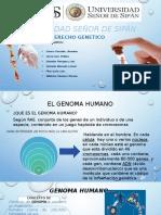 DIAPOS-GENITICA