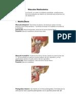 Músculos Masticatorios.docx