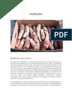64383998-Malanga-cultivo.pdf