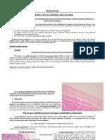 Histofisiologia del aparato cardiovascular